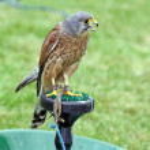 Stunning bird of prey — Stock Photo #9176455