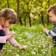 Kids picking daisies park - Stock Photo