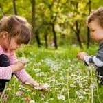 Kids picking daisies park — Stock Photo