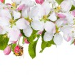 Stock Photo: Spring flowers & bee wite background a large strip