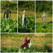 Stock Photo: Scarecrows