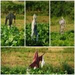 Scarecrows — Stock Photo #10162226