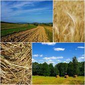Polish countryside — Stock Photo
