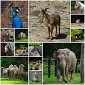 Zoological garden — Stock Photo