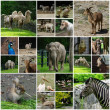 Stock Photo: Zoological garden