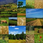 Countryside, farming, growing — Stock Photo