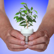 Tree growing from the base of the light bulb - Foto de Stock