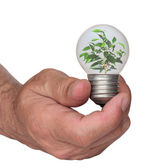 Tree growing from the base of the light bulb — Stock Photo