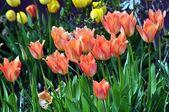 Spring flowers.Spring blossom. — Stock Photo