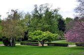 Park w bonn.germany. — Zdjęcie stockowe