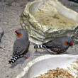 Stock Photo: Birds siting on floor.