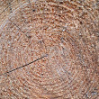 Texture of a wood — Stock Photo #9524727