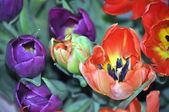 Flowers.Tulips. — Stockfoto