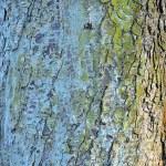 textura dřeva — Stock fotografie