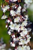 цветут весной — Стоковое фото