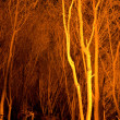 Stock Photo: Tree stems at night