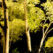 Stock Photo: Maple tree in artificial light