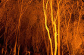Tree stems at night — Stock Photo