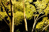 Maple tree in artificial light — Stock Photo