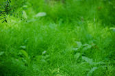 Natural green background composed of horse tail — Stock Photo