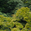Stock Photo: Forest canopy as seen from a mountain slope