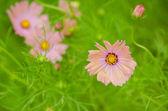 Flores cor de rosa — Foto Stock