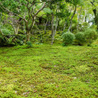 Moss in a japanese garden - Stock Photo