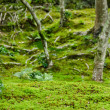 Moss in a forest - Stock Photo