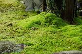Moss and stones — Stock Photo