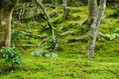 Moss in a forest — Stock Photo