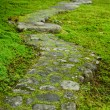 Pathway through moss - Stock Photo