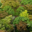 Forest canopy as seen from above - Stock Photo