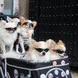 Pram with dogs wearing sunglasses — Stock Photo
