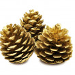 Golden pine cones — Stock Photo