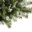 Foto de Stock  : Christmas tree branches