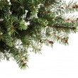 Stock Photo: Christmas tree branches
