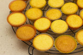 Freshly backed cupcakes on a backing rack. Shallow depth of field — Stock Photo
