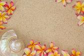 Flor de frangipani e uma concha do mar na areia — Foto Stock