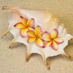Frangipani, plumeria flowers in seashell, on sand — Stock Photo #9652107
