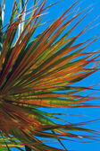 Palm tree leaf against the sky — Stock Photo