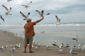 Man feeding seagulls — Stock Photo