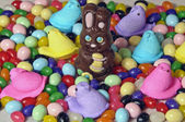 Chocolate Easter Rabbit — Stock Photo