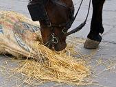 Koń jedzący — Zdjęcie stockowe