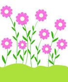 Flowering plants — Stock Photo