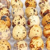 Contenitore di uova di quaglia — Foto Stock