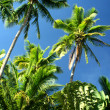 Stock Photo: Under the palm trees