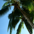 Under the palm trees — Stock Photo #8340624