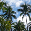 Under the palm trees - Stock Photo
