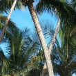 Stock Photo: Under palm trees