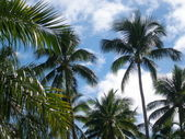 Under the palm trees — Stock Photo